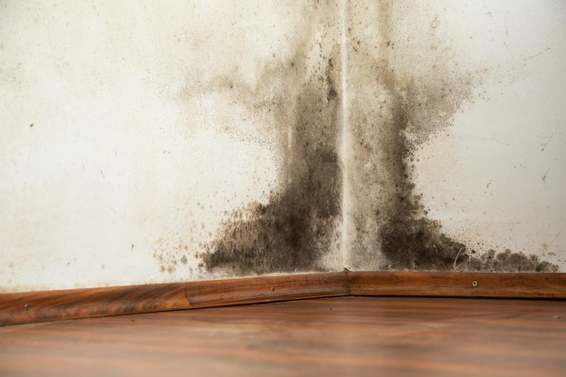 black-mold-on-a-wall