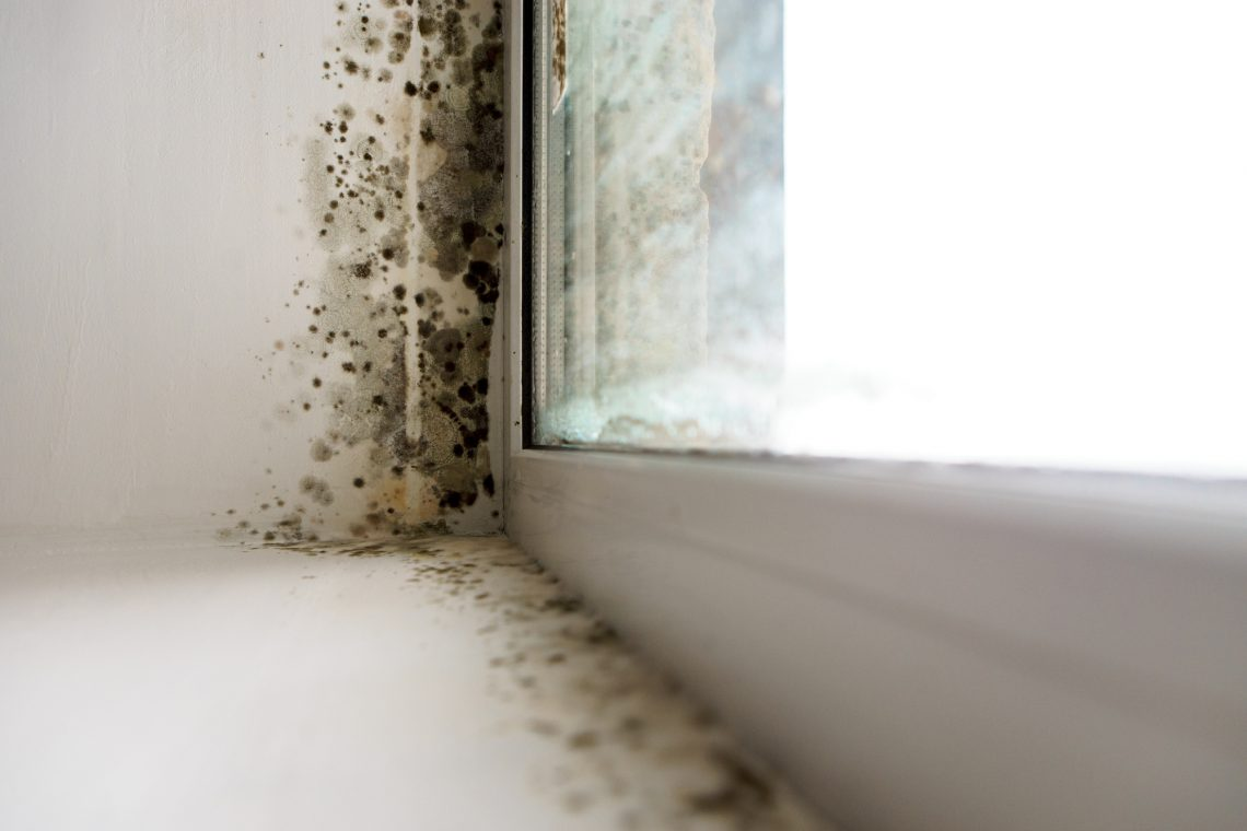 Growing mold in the sides of the window